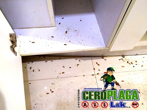 fumigacion chiripas termitas cucarachas zancudos pulgas