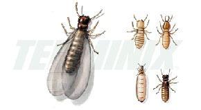 fumigación con camara de gas ( termitas polilla comegen )