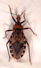 fumigación contra abejas avispas insectos voladores