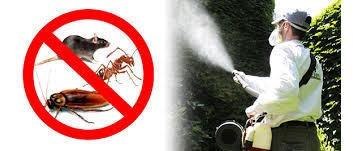 fumigación contra chiripa , garrapata , pulgas en casa , edf