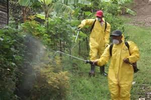 fumigacion contra chiripas
