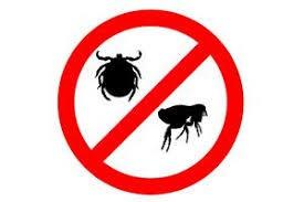 fumigacion contra garrapatas y pulgas