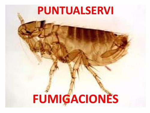 fumigación contra pulgas garrapatas hormigas alacranes