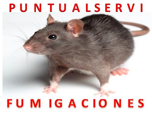 fumigacion contra ratas ratones roedores insectos rastreros