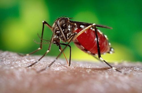 fumigación contra zika chikungunya dengue zancudos moscas