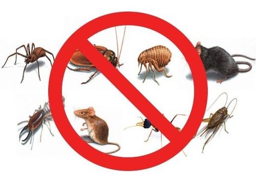 fumigacion control plagas desinfecciones certificada