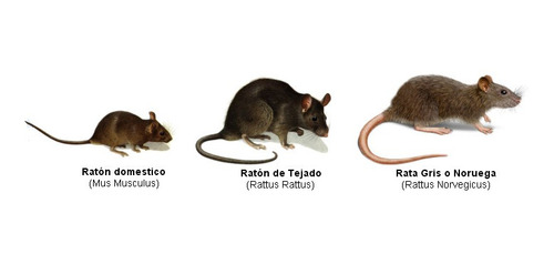 fumigacion cucarachas ratas dengue hormig pulgas polilla