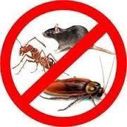 fumigación cucarachas ratas pulgas caba certificado gcba