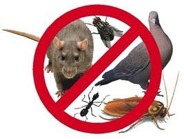 fumigacion, cucarachas,hormigas,pulgas, ratas, palomas,araña