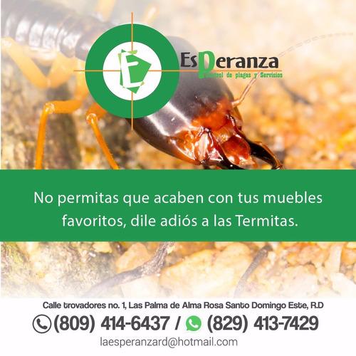 fumigacion de comején y termitas