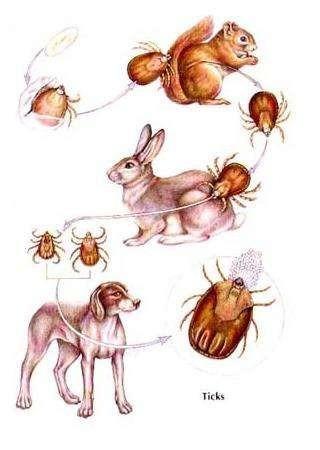 fumigacion de garrapatas y  pulgas chiripas y cucarachas