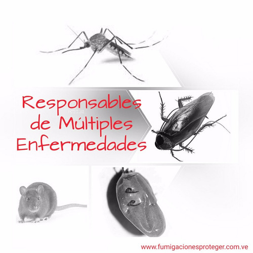 fumigacion en maracaibo experto en control de insecto y rata