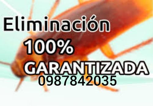 fumigación garantizada cucarachas pulgas ratas