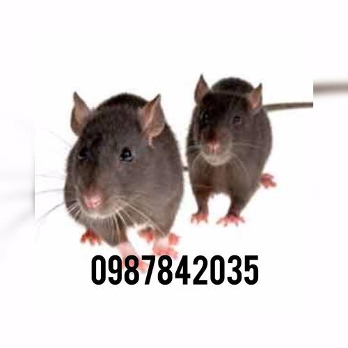 fumigacion garantizada cucarachas ratas pulgas