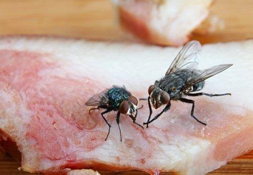 fumigacion para moscas y polillas
