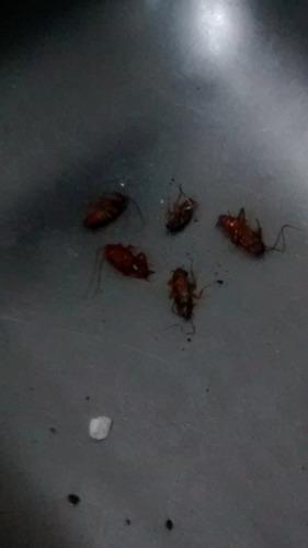 fumigacion plagas ratas cucarachas hormigas murcielagos