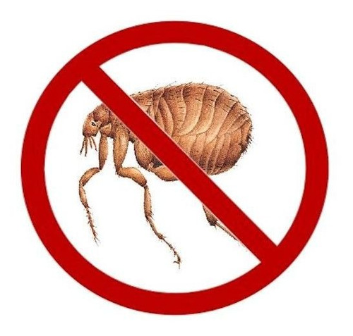 fumigación pulgas