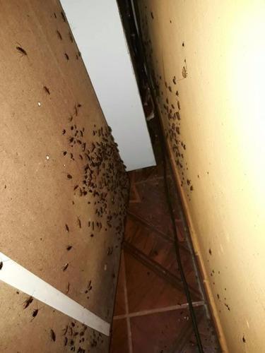 fumigación total de cucarachas,  pulgas y todos los insectos