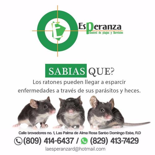 fumigacion y control de roedores