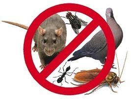 fumigacion,cucarachas,hormigas,pulgas, ratas, palomas,arañas