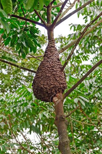 fumigaciones comejen (termitas) y polillas 100% garantizadas