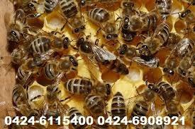 fumigaciones contra chiripas, garrapatas, comején, abejas...