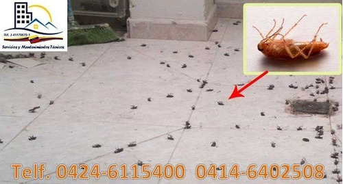fumigaciones contra chiripas, garrapatas, comején, moscas...