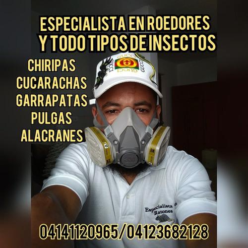 fumigaciones contra termitas polillas comejenes y gorgojos