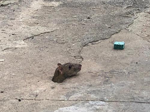 fumigaciones cucarachas, ratas, casas edificios abiertos!