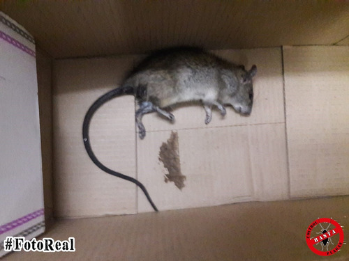 fumigaciones cucarachas, ratas, casas edificios fumigacion