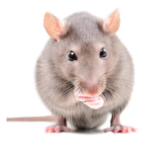 fumigaciones cucarachas ratas control de plagas desinfeccion