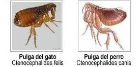 fumigaciones cucarachas ratas pulgas