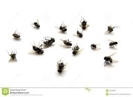 fumigaciones cucarachas,hormigas,avejas,etc tel 099191695