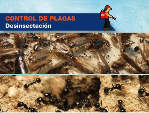 fumigaciones fumigacion plagas palomas murcielagos