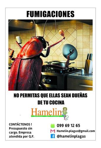 fumigaciones - hamelin control de plagas - desinfecciones