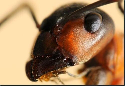 fumigaciones plagas ratas cucarachas hormigas murcielagos