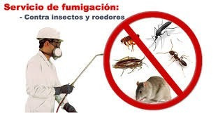 fumigaciones proservc.a elimin chiripas autoriz minis sanida