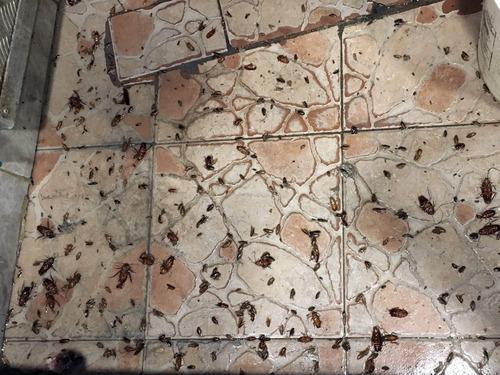 fumigaciones técnicas, chiripas, cucarachas, termitas, etc