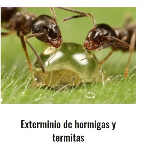 fumigador control de plagas ratas insectos dengue