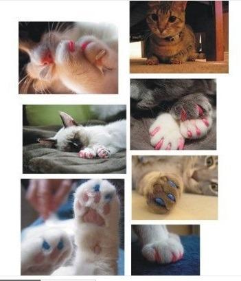 fundas para uñas de gatos en talla xs hasta l variedad color
