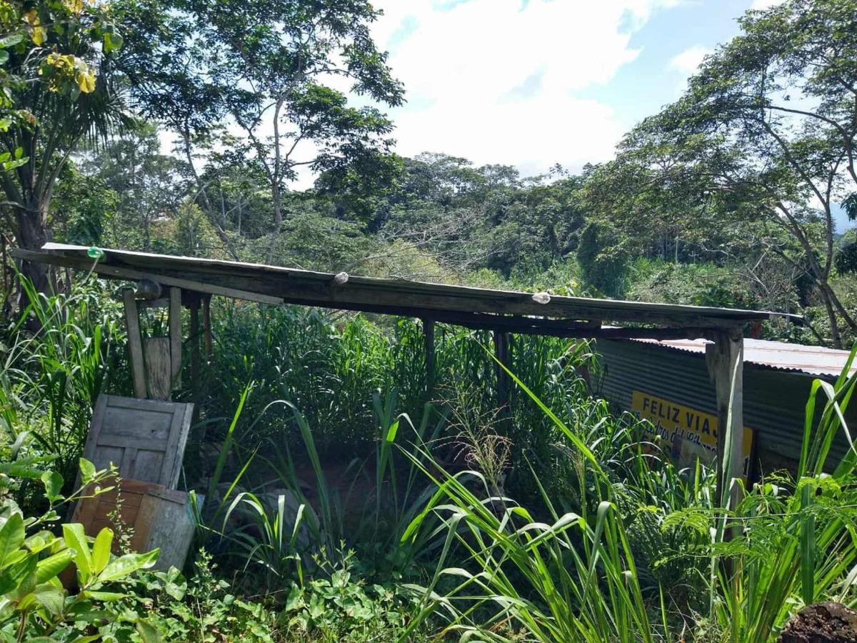 fundo 12 hectáreas moyobamba