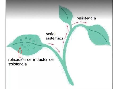 fungicida y bactericida sistémico