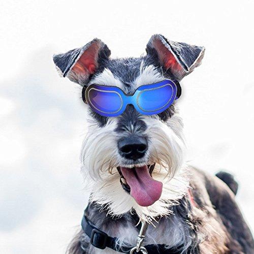 091e42d033 Gafas De Sol Para Mascotas Gafas De Sol Para Motocicleta Imp ...