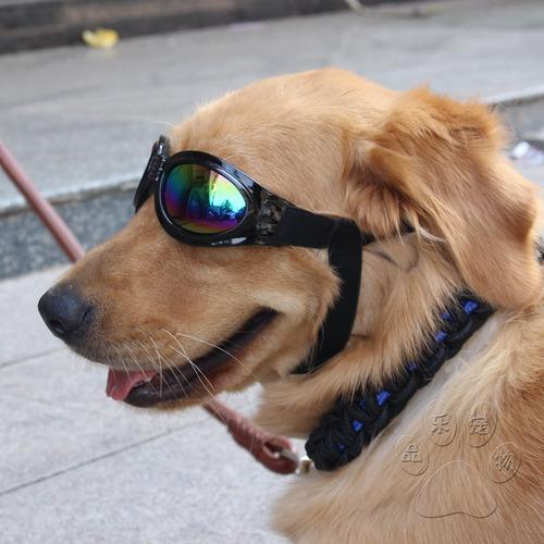 gafas mascotas para perros protección solar colores