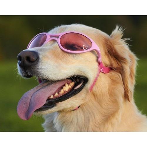 gafas para perro marco doggles k9 optix brillante rosa de g
