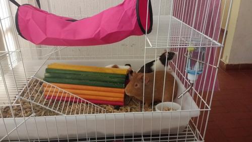 gaiola de 3 andares com bacia plástica para roedores