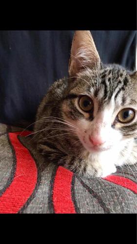 gatita tres meses en adopción responsable cercado de lima