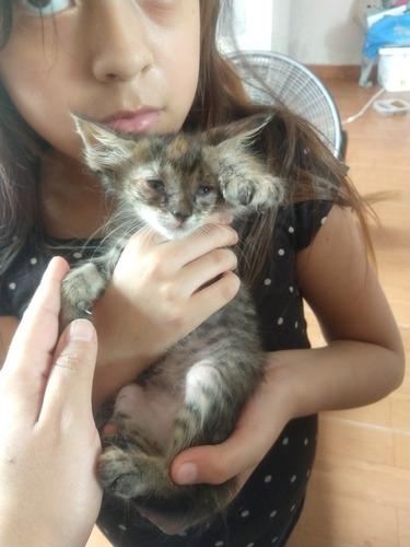 gatitos en adopción