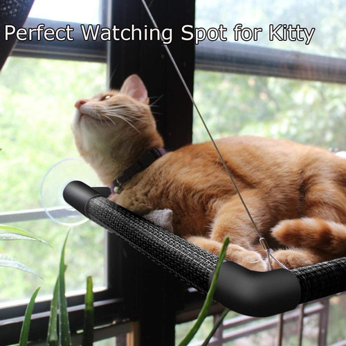 gato cama gato gato