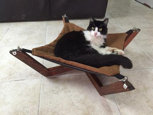 gato cama mascota